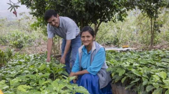 Apoyo a iniciativas productivas basadas en la conservación – WCS