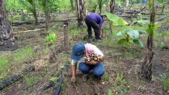 Programa de Desarrollo Territorial Comunitario para Comunidades Alejadas de la Amazonía (DETCAA) – FUNDESNAP